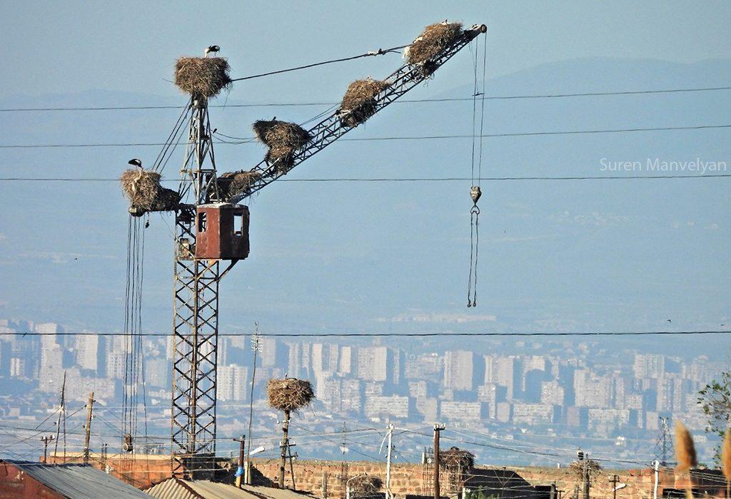 Apartment house of storks, Armenia 2021